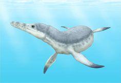 Edgarosaurus by Smokeybjb on Wikipedia