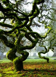 #gnarly tree
