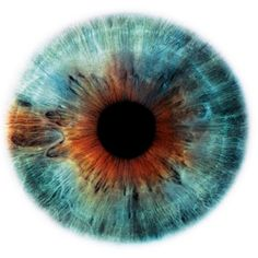 Eye | Iris | Pupil | 目 | œil | глаз | Occhio | Ojo | Color | Texture | Pattern | Macro | by Rankin (Eyescapes series)