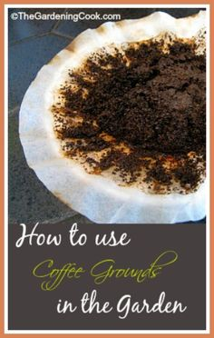 Use Your Old Coffee Grounds in the Garden. Camellias, hydrangeas, and roses are all nitrogen loving plants so the coffee grounds help. The grounds are also a great deterrent for slugs and snails around hostas and other plants that the pests love. Vegetable Garden, Garden Plants, Herb Garden, Organic Gardening, Gardening Tips, Organic Fertilizer, Uses For Coffee Grounds, My Secret Garden, Plantation