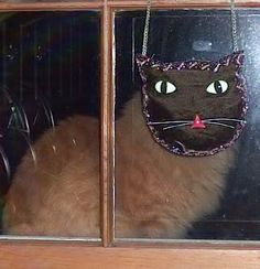"""Meet Tang. This was taken on Halloween-he positioned himself right in front of this cat purse outside of the window. """"noone can see me...noone can see me""""..."""
