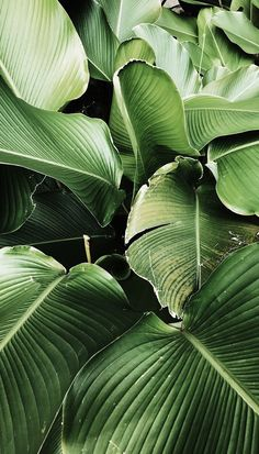 Green Leaves Clean Air – Best Garden Plants And Planting Wallpaper Bali, Garden Wallpaper, Plant Wallpaper, Landscape Wallpaper, Leaves Wallpaper Iphone, Iphone Wallpaper Jungle, Wallpaper Ideas, Pattern Wallpaper, Green Wallpaper Phone