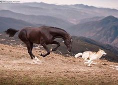 Rare Horses, Horses And Dogs, Wild Horses, Animals And Pets, Cute Animals, Most Beautiful Horses, Pretty Horses, Horse Love, Horse Riding Quotes