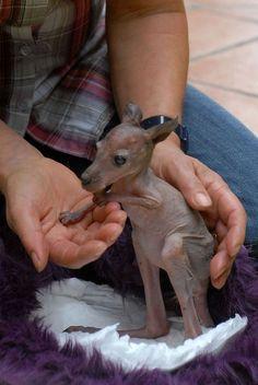 Baby Kangoeroe in goede handen