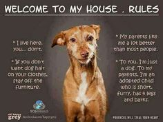 All the four legged kids in our family do agree