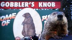 Phil was in an unusually feisty mood, but once he settled down, he saw his own shadow, officials deemed. Staten Island Chuck didn't agree, predicting an early spring.