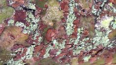 Tree bark & lichen