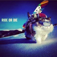 Snowboarding cats