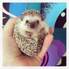Hedgina is a fan of the arts! #patchwhisky #CHSArt #Hedgehog #monster #cutie   by Joseph W. Nienstedt