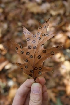 DIY: Herfstbladeren versieren Diys, Leaves, Nature, Blog, Naturaleza, Bricolage, Do It Yourself, Blogging, Nature Illustration