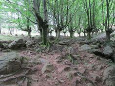 Barro y piedras, raíces y candelabros. Foto: María Pardo.