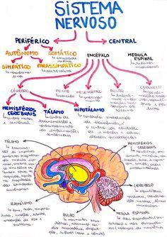 Study Biology, Medicine Notes, Nursing School Notes, Science Notes, Study Organization, Medical Anatomy, Anatomy Study, School Study Tips, School Motivation