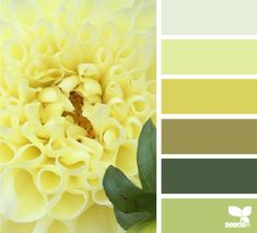 Petalled Yellow - http://design-seeds.com/index.php/home/entry/petalled-yellow