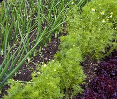 Gardening, Plants, Lawn And Garden, Plant, Planets, Horticulture