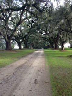 Entrance To Mansfield Plantation Georgetown Sc