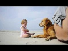 Golden Retriever and Baby Playing on the beach - YouTube