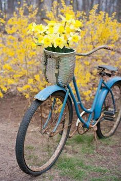 Basket of daffodils on a blue bike Cruiser Bicycle, Bicycle Art, Bike Planter, Bicycle Pictures, Bicycle Basket, Bike Photography, Old Bikes, Vintage Bicycles, Wheelbarrow