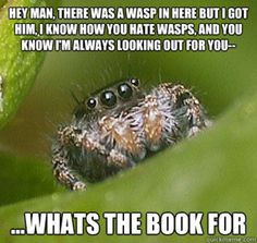 See more 'Misunderstood Spider' images on Know Your Meme!