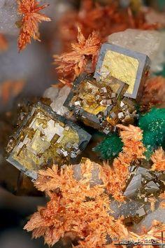 Segnitite (cubes) avec Malachite et Carminite (?). Meleg-hill, Hongrie Taille=2mm Photo Stone Ásványfotós