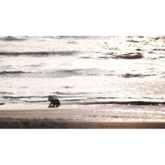 Video about One afternoon on Goa beach, India - Images and music by Indivue   #travel #Goa #beach #India #sea #sun #beachlife #video #Intia #matka #loma #rantaloma    See the video in https://indivue.com/2016/08/03/lost-found-from-goa-beach/