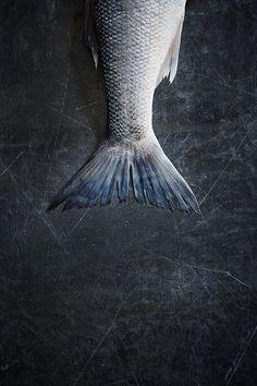 Harrods Wild Bass - Photography © Mowie Kay // Food styling Emma Marsden // Prop styling Jennifer Kay