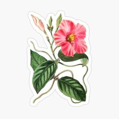 Kids Stickers, Glossier Stickers, Magnets, My Arts, Art Prints, Printed, Awesome, Stationary, Artist