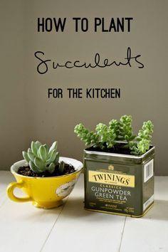 So eingepflanzt passen Sukkulenten perfekt in die Küche.