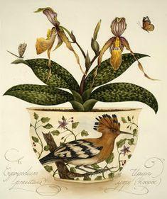 Коллекция картинок: Цветы и птицы Kelly Higgs