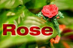 #rainbowloom rose tutorial at http://youtu.be/LyEr30k_c2g