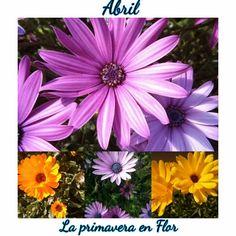 Crochet y demos: 12+3=15 Mazo - La primavera en flor