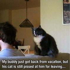 catmeme_vacation