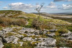 The Burren in Co.Clare is a unique ecological area in south-west Ireland and contains this vast swathe of glacial-era limestone. A must visit! For more images of this beautiful land check out. More Images, Ecology, Street Photography, Celtic, Ireland, Mountains, Landscape, Unique, Check