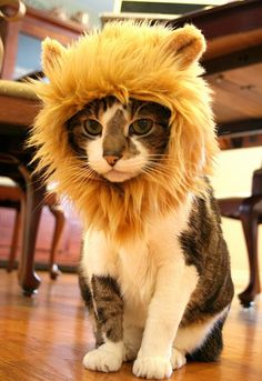 #cats #cat #custome @Paisley Mitchell Mitchell brook I'm going to get your girls something like this! Haha