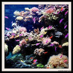 Marine Life Park @ Resorts World Sentosa.