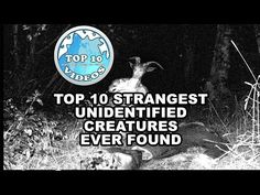Top 10 Strangest Unidentified Creatures Ever Found - YouTube