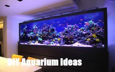 This luxury fish tank design, custom made aquarium for a luxury London townhouse has been listed as one of the most outstanding aquariums in the world.