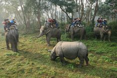 Take a ride on the wild side while exploring India and Nepal with G-Adventures.