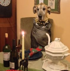 I am finally old enough to sit at the human table for Christmas dinner...no more PUPPY table for me!!!
