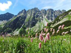 Mengusovská Valley, High Tatras, Slovakia