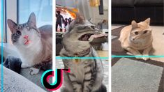 Time Warp Scan Tiktok Cats Compilation 12 Cats Cat Memes Funny Cats