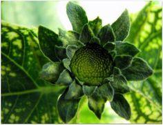 #green #flower