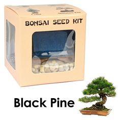 Eve's Black Pine Bonsai Seed Kit, Woody, Complete Kit to Grow Black Pine Bonsai Tree from Seed Eve's Garden, Inc http://www.amazon.com/dp/B0049V4BC4/ref=cm_sw_r_pi_dp_vGdOvb0TFGQCB