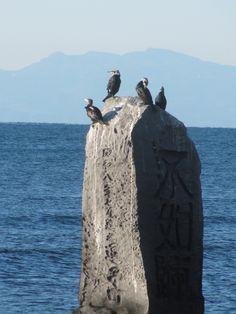 "Japanese cormorants are resting on a monument of ""Hototogisu"".  Zushi."
