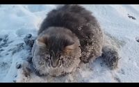 Last month, Sergey Baranov, who lives in Zlatoust, Russia, woke up to find a cat frozen to the ice outside his house. | Everyone Loves The Man Who Rescued This Cat Stuck In Ice - BuzzFeed News