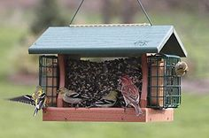 Bird Feeder With Cage