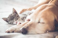 Any & Cleo - little Cat and sleeping Dog…