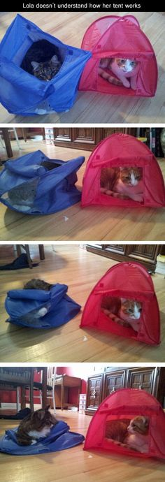 This kitty couldn't figure out how to use her tent!