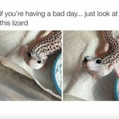 Image result for pet lizards tumblr