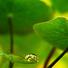 Feeling small in a Big World - art print by Ingz at Redbubble.com  #photography #home #homedecor #print #canvas #green #leaf #leaves #nature #reflection #macro #water #droplet #raindrop #nasturtium