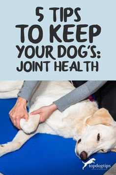 This is about 5 actionable tips on how to improve dog's joint health. You'll learn the importance of exercise and healthy diet in this guide. Green Lipped Mussel, Dog Health Tips, Low Impact Workout, Health Problems, I Love Dogs, Exercise, Puppies, Diet, Ejercicio